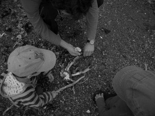 Jugando a descubrir los secretos de la naturaleza en Chiloé (Chile, 2013)