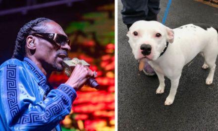 Snoop Dogg oferece moradia a cachorrinho que foi abandonado na Véspera de Natal nos EUA