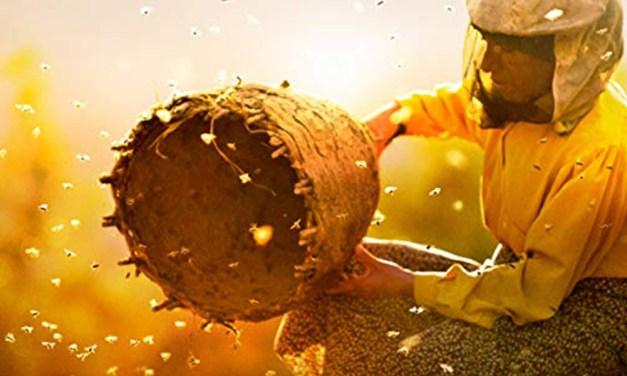 Crítica   Honeyland – Entre abelhas e mel