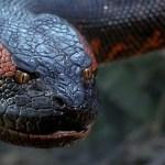 Reboot de Anaconda é anunciado pela Sony