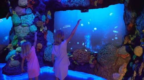 9 Encounter, Interactive Coral Reef at Night