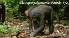 The Easy Going Bonobo
