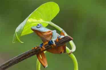Frog Viv adapt