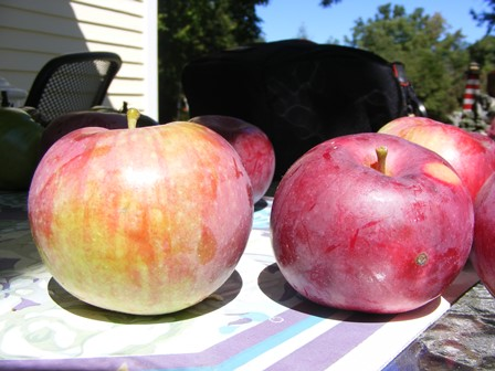 Some of our backyard apples.
