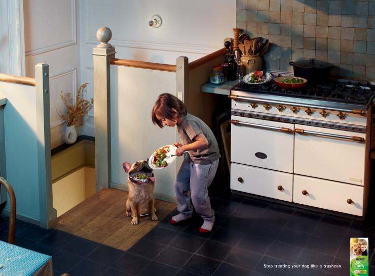 purina-dog-chow-pug-740x546