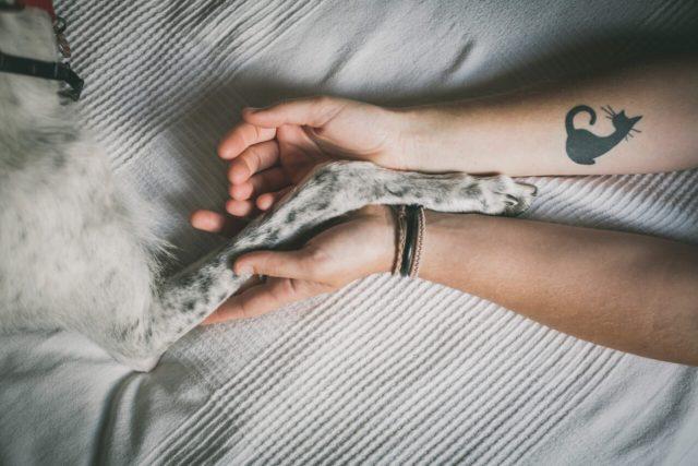 ariadna creus-fotografo mascotas-galgo