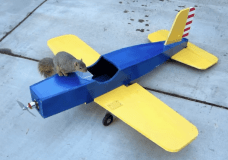 Wild Squirrel flys plane