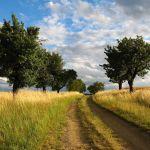 ¿Te animas con el emprendimiento rural?