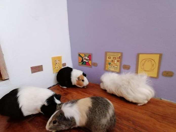 Exposición temporal Cui 20: una usuaria de Facebook recrea pinturas icónicas para sus cuyos 7
