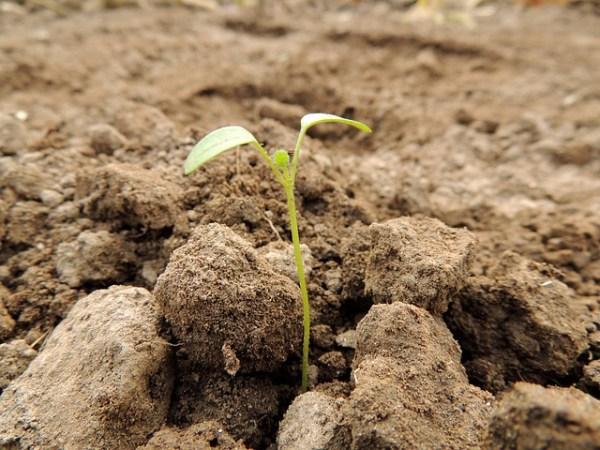 A palavra de Deus é comparada a uma semente