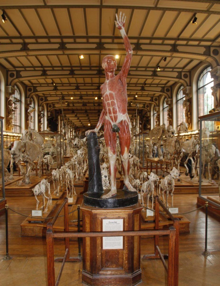 Paris  Visitando museus com uma criana bem ativa Museu