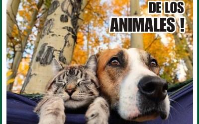 EL DÍA DE LOS ANIMALES !