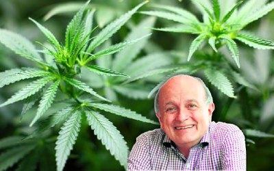 Marihuana en Cortes