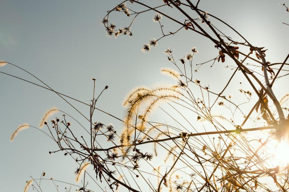 写真はPAKUTASOより。枯草と冬の陽気。