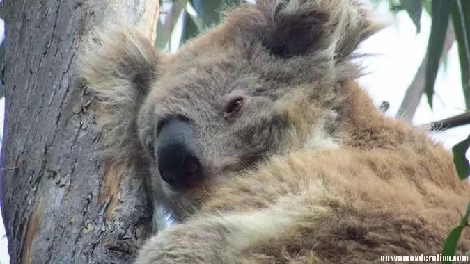 Isla Raymond Australia