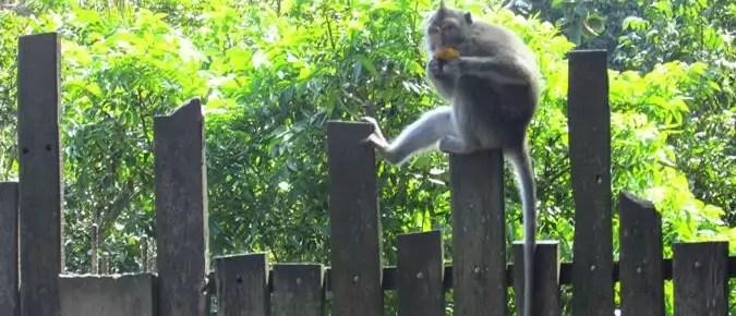 Que ver en Ubud y alrededores: Guía completa