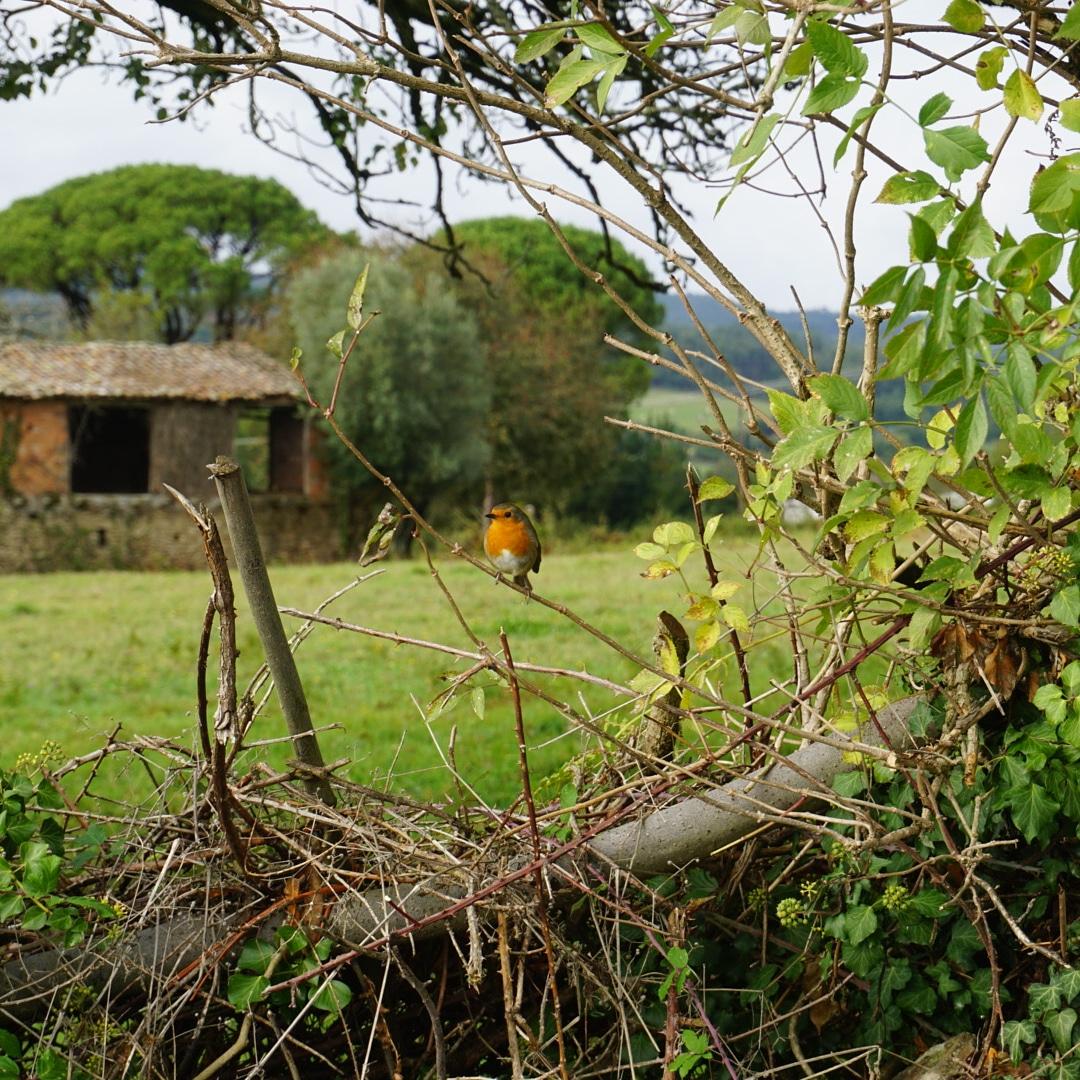 Naturaleza, Camino de Santiago
