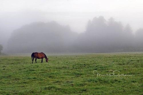 2012Jul21_Ireland_6791