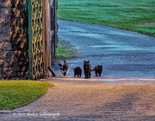 2012Jul24_Ireland_6245_cats