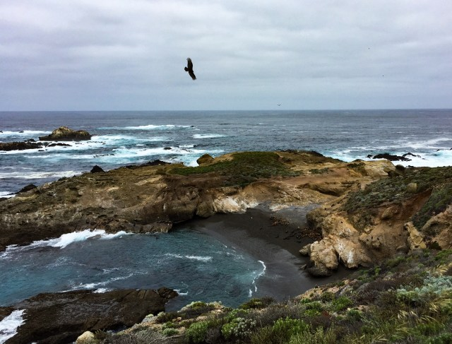 View from the South Shore Trail, Point Lobos State Park, Carmel