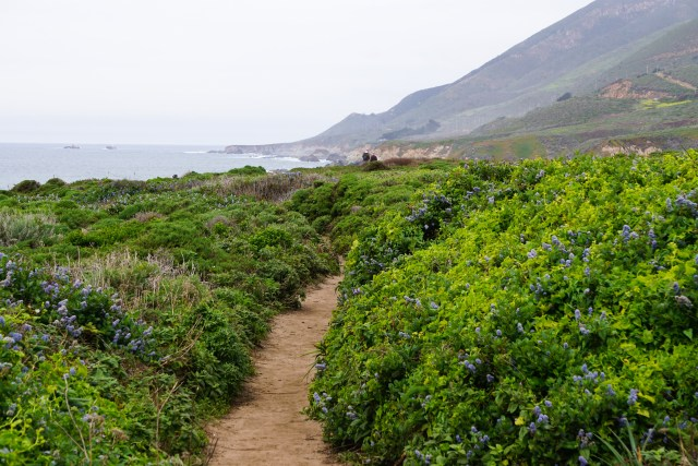 Walking Trail at Garrapata State Park on the Pacific Coast Highway