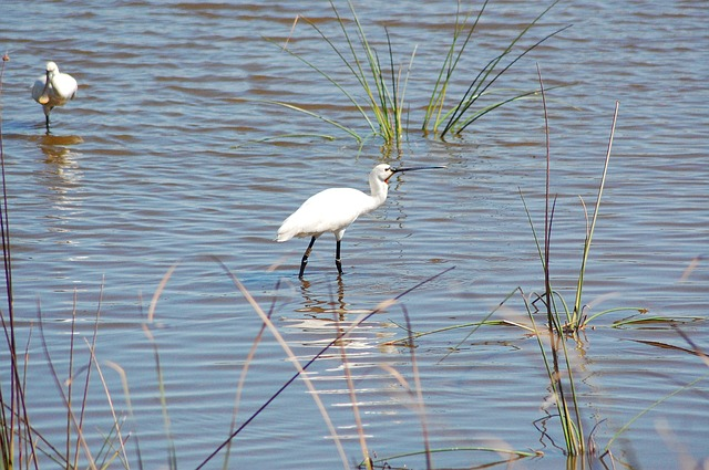 Birds Donana National Park Andalusia Spain