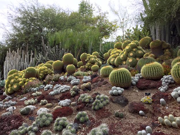 Desert Garden Huntington Gardens Pasadena California