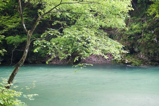 The Radovna River has created the stunning Vintgar Gorge in Slovenia