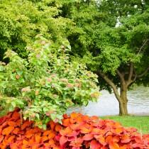 10 Fun Things to Do in the Boston Public Garden (Swan Boat Rides, Anyone?)!