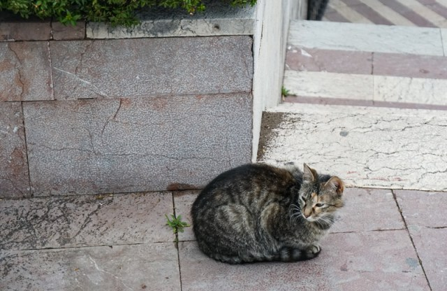 Cat in Kotor Montenegro