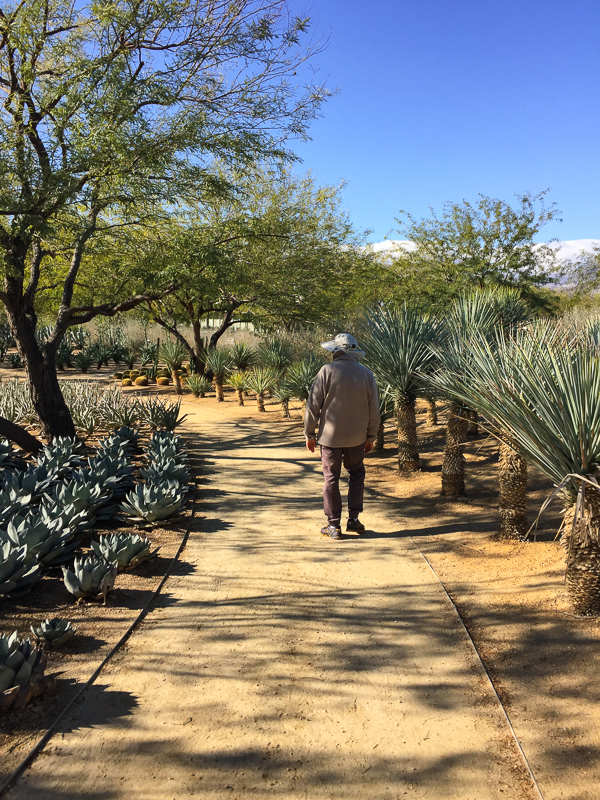 The desert gardens at Sunnylands in Rancho Mirage, California, USA