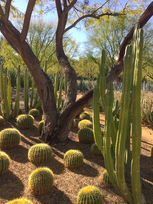 Succulents arranged beautifully at Sunnylands in Rancho Mirage California