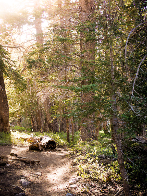 Trail in Mount San Jacinto State Park near Palm Springs, California