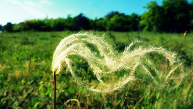 A Leaf In The Wind: Three Meditations
