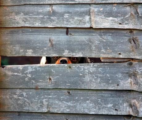 Nervous Neighborhood Dog