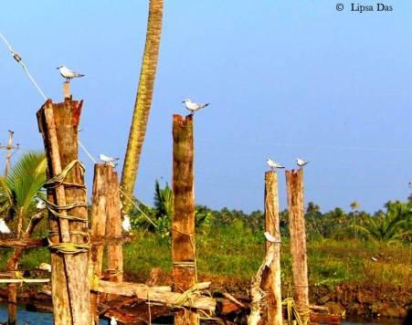 Birds_perching