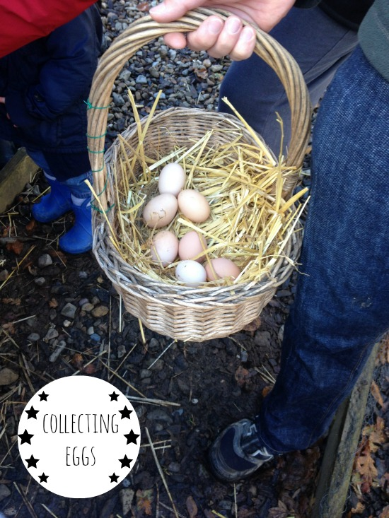 Egg collecting on the farm