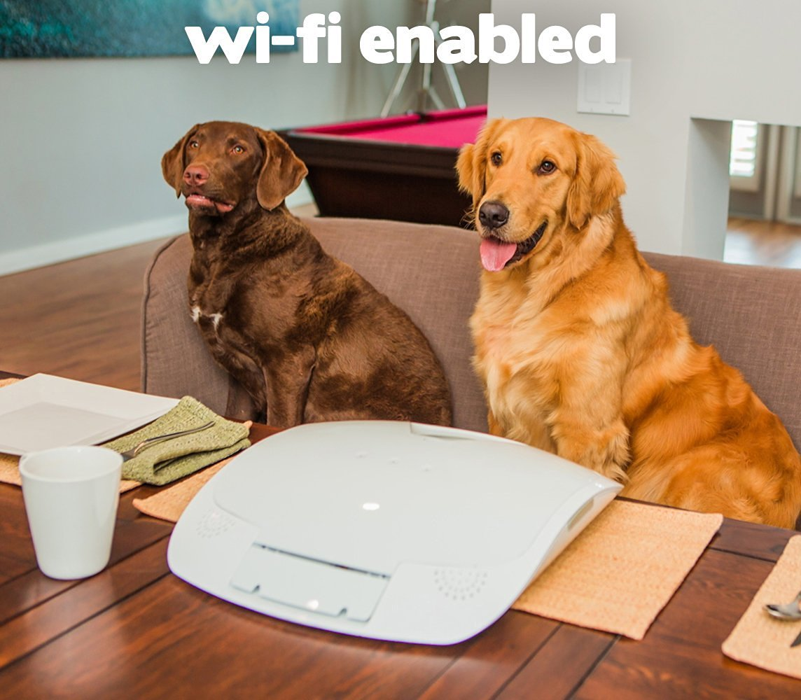 for your of pet rollipet the what auto care automatic caring with remotely think we smart feeder by