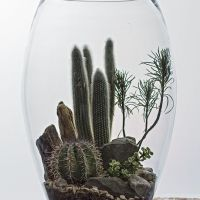 The Urban Grow - Terrarium