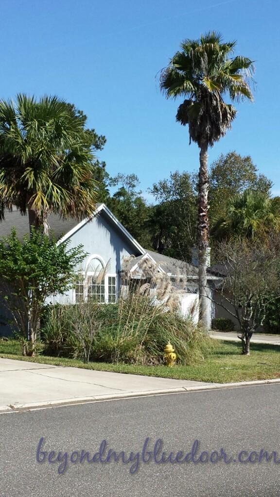 Florida, neighborhood, walking, travel, traveling