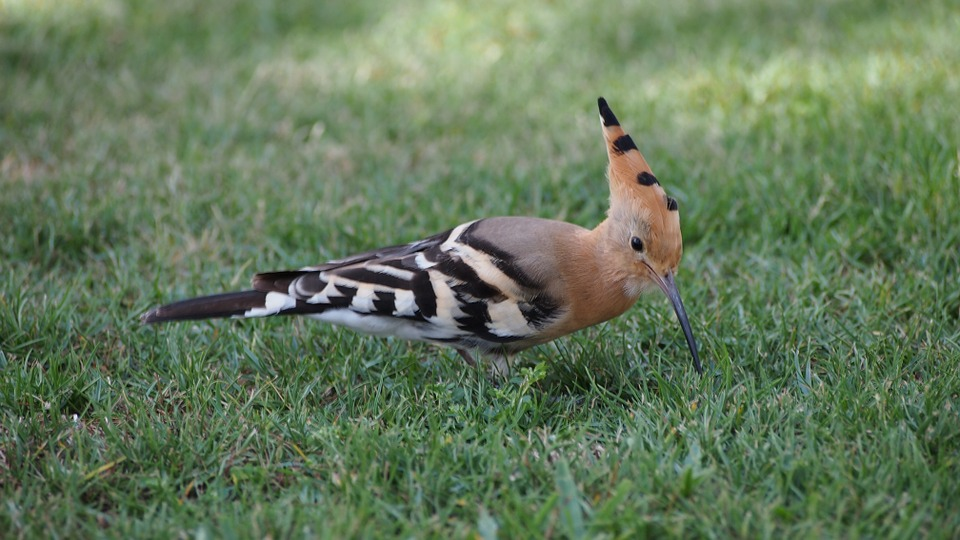 ¿Cómo mantener a tu pájaro saludable en verano?