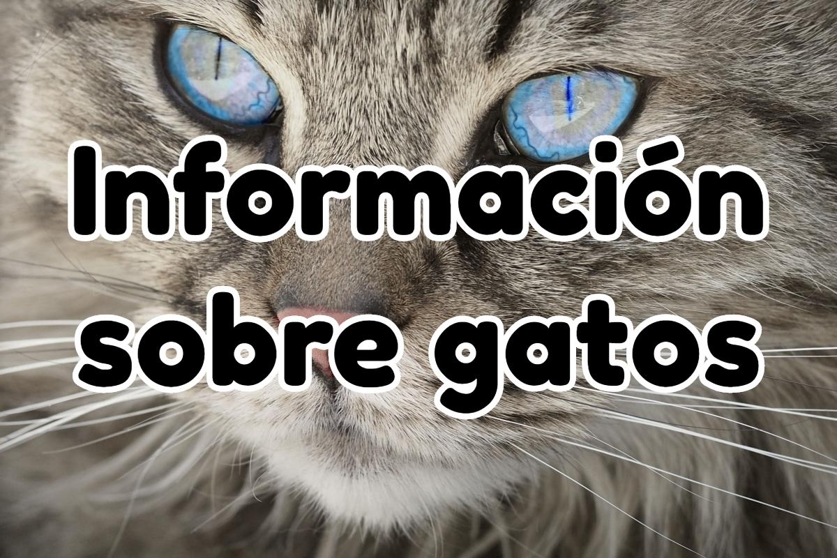 Información Sobre Gatos: salud, nutrición y curiosidades