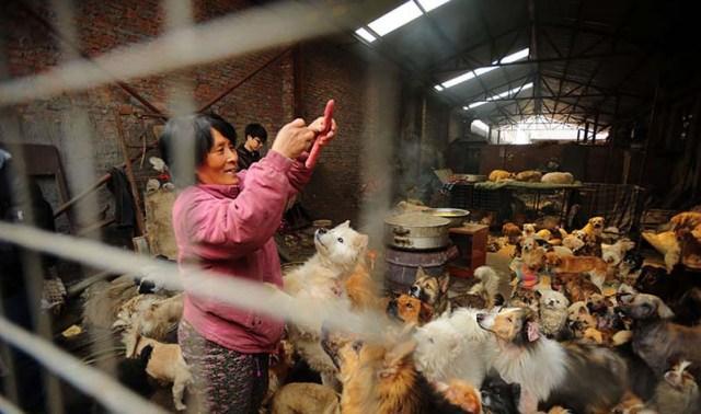 donna-saves-100-cani-Yulin-11