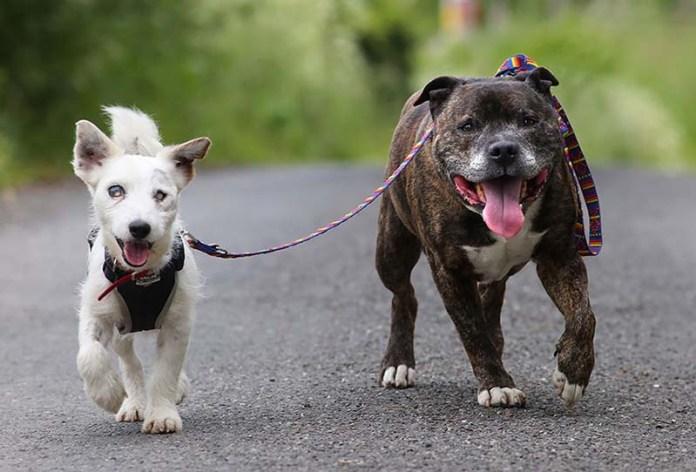 Un cane guida per un cane cieco