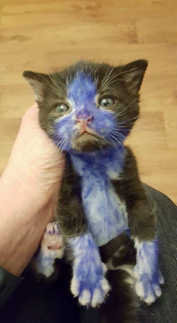 Smurf, gatto salvato