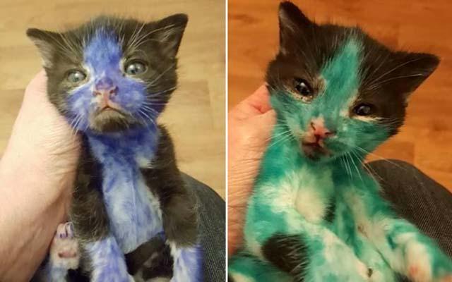 Rescue due colorato gatti con pennarello indelebile
