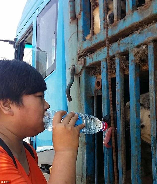 Attivisti nutriti cani nel camion
