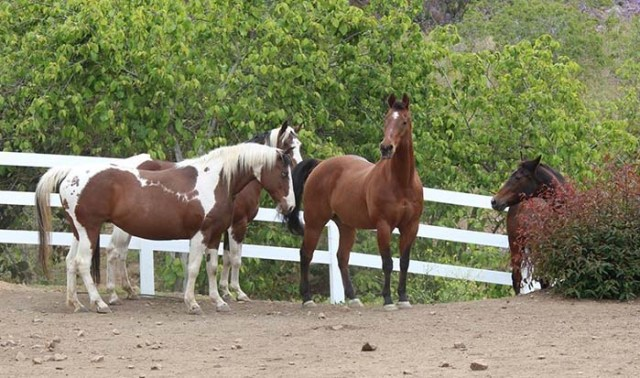 Cavalli in un santuario