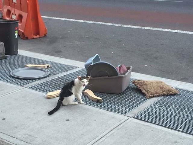 abbandonata su un gatto di strada
