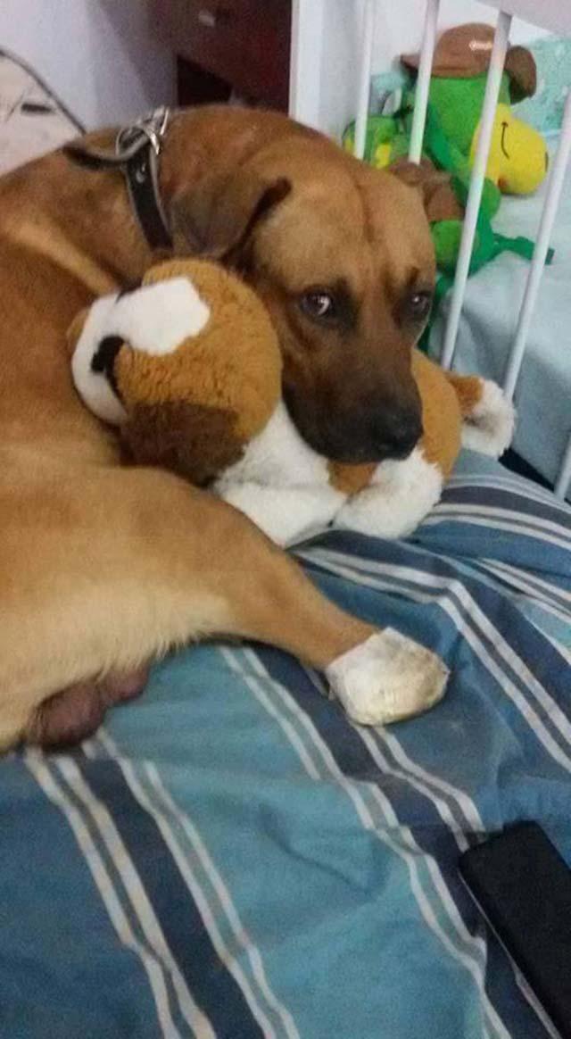 cane maltrattato ora è felice